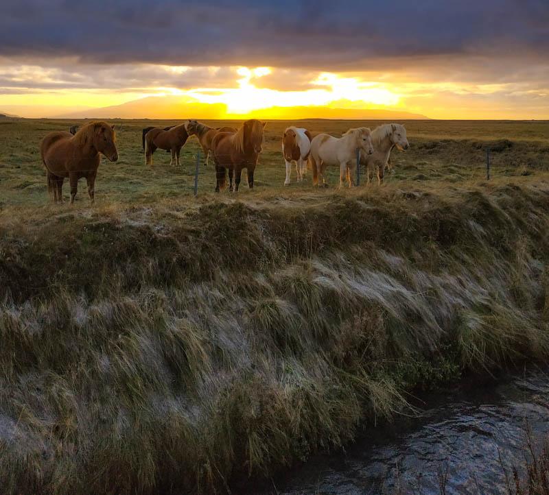 Άλογα στην Ισλανδία